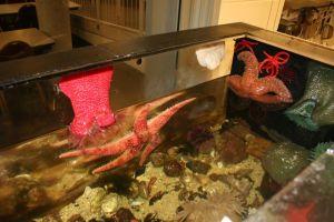 L'intérieur d'un aquarium du Pacifique