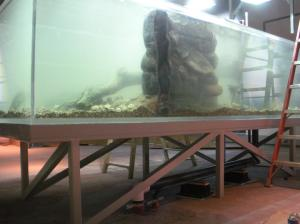Un des aquariums de l'exposition