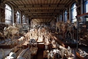 Squelettes des galeries de Paléontologie et d'Anatomie comparée, à Paris, en France.