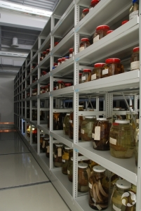 Étagères de bocaux contenant des spécimens de poissons préservés dans l'éthanol.