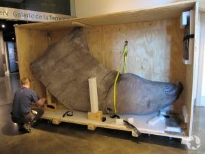 Un homme déballe une caisse où se trouvent la tête et le cou d'un modèle grandeur nature d'Indricotherium.
