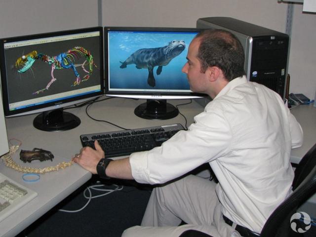 Un homme devant un ordinateur montrant une reconstitution virtuelle de Puijila darwini.