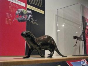 La sculpture en bronze de Puijila darwini et une impression 3D de son squelette, à l'arrière-plan.