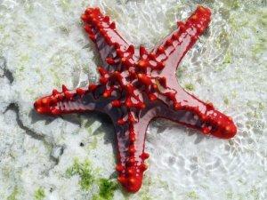 Une étoile de mer sur le sable, dans l'eau peu profonde.