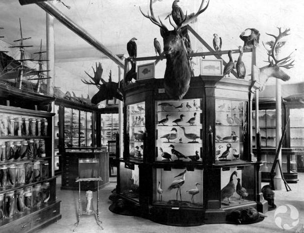 Photo d'archives du Dominion Fisheries Museum.