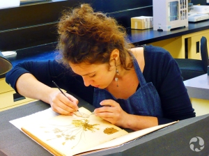 Marion Cinqualbre travaillant à la page d'un album.