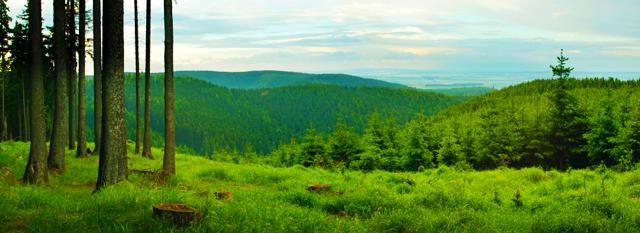Vue panoramique d'une forêt et de champs, avec des montagnes recouvertes d'arbres à l'arrière-plan.