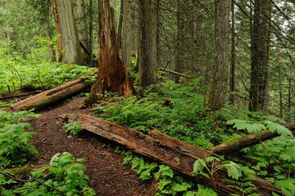 Un sentier dans le sous-bois d'une forêt.