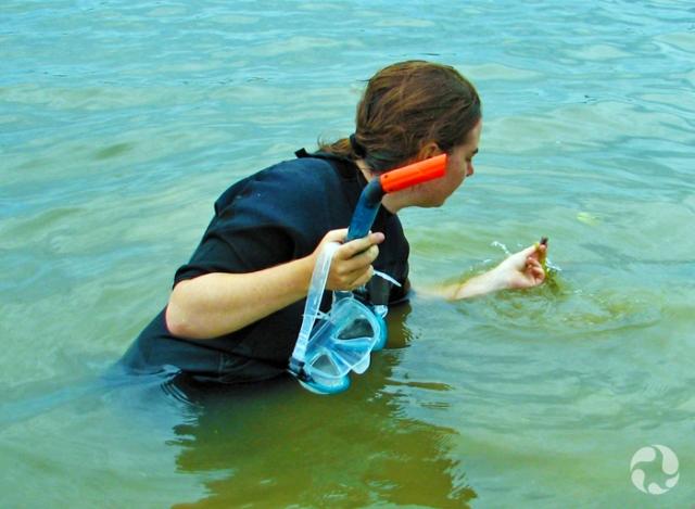 Une femme debout dans une rivière, de l'eau jusqu'à la taille, examine un petit coquillage qu'elle tient dans sa main. Elle tient un masque de plongée et un tuba dans l'autre main.