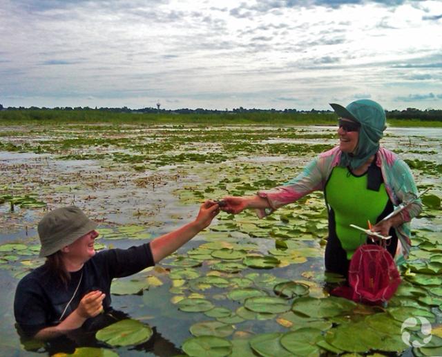 Une chercheure accroupie dans la rivière Outaouais, au milieu de nénuphars, tend une moule à sa collègue. Celle-ci est debout dans la rivière et tient une règle, un sac et une tablette à la main.