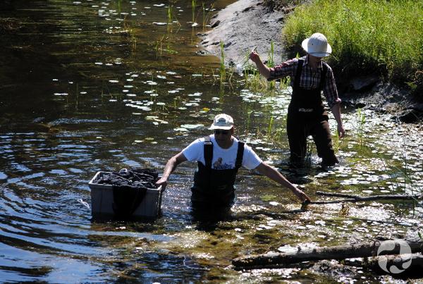 Un homme et une femme marchent dans l'eau à mi-cuisse. L'homme fait flotter à ses côtés un bac de plastique contenant un filet.