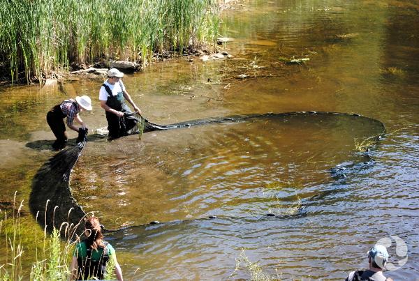 Des pêcheurs ferment le cercle du filet de pêche, dans l'eau peu profonde.