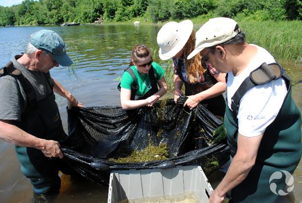 Quatre personnes soulèvent le filet de pêche et son contenu en dehors de l'eau.