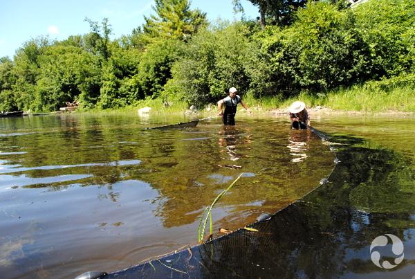 Un homme marche dans l'eau en tirant un filet derrière lui. Il s'approche d'une femme qui se tient debout dans l'eau.