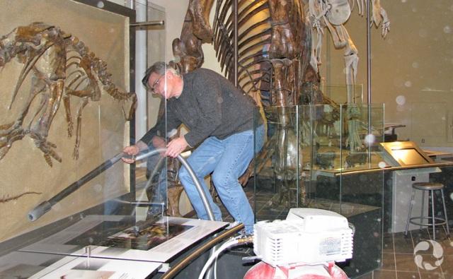 Un membre du personnel aspire l'arrière du panneau transparent protégeant un fossile monté sur panneau.