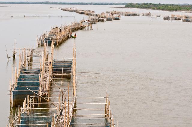 Les installations d'un élevage de poissons dans la rivière Chanthaburi, en Thaïlande.
