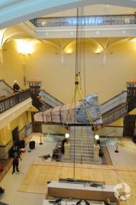 Le crâne de baleine en train d'être hissé au quatrième étage.
