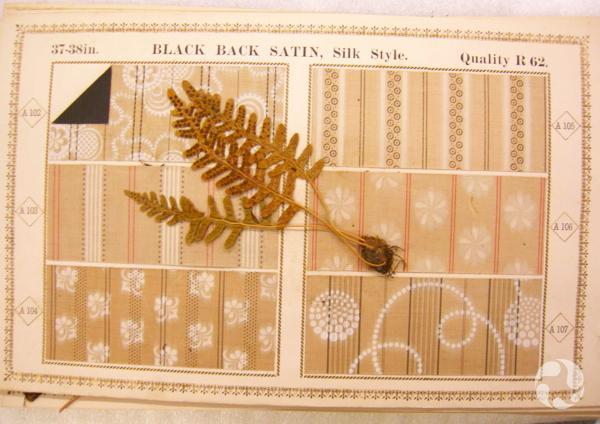 Un spécimen de plante collé sur un échantillon de tissu.