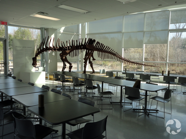 Le squelette d'un dinosaure sauropode,  Amargasaurus cazaui, avec des rangées de tables et de chaises.