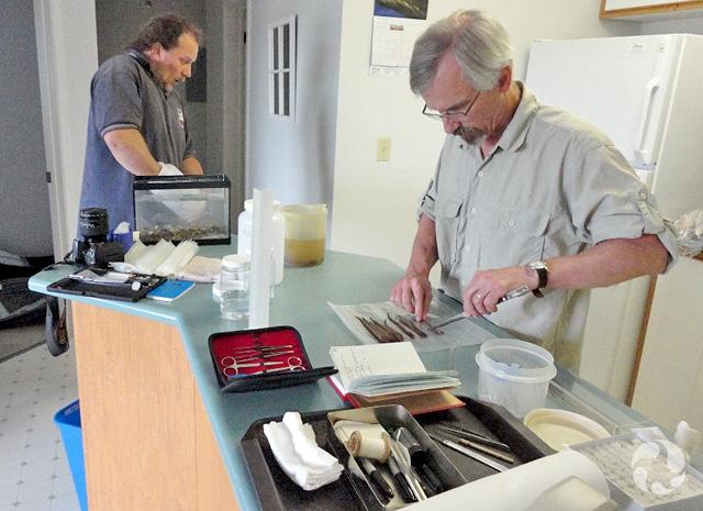 Des instruments de laboratoire sont disposés sur un comptoir de cuisine. Un homme a les mains dans un aquarium alors qu'un autre dissèque une lamproie.