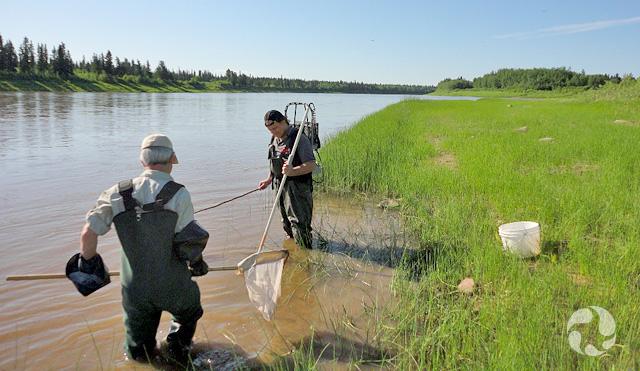 Deux hommes à la pêche à la lamproie, debout dans l'eau près de la berge.