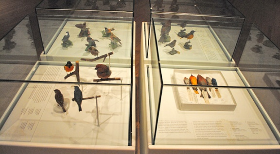 Quatre vitrines comportant des spécimens d'oiseaux mis en peau, des spécimens naturalisés et montés, et des figurines d'oiseaux en porcelaine.