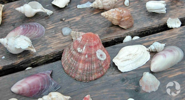 Des coquillages de diverses espèces disposés sur une table à pique-nique.