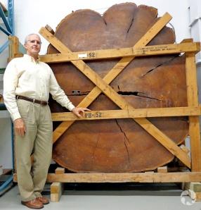 Mark Graham et la coupe transversale d'un tronc (sur le côté) aussi grande que lui.