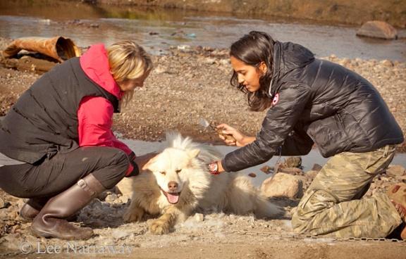 Deux femmes brossent un chien blanc.