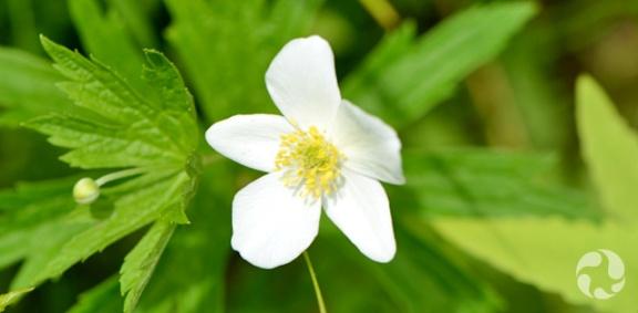 Une fleur blanche avec des feuilles vertes.
