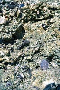 Gros plan sur une roche contenant des petits minéraux noirs.