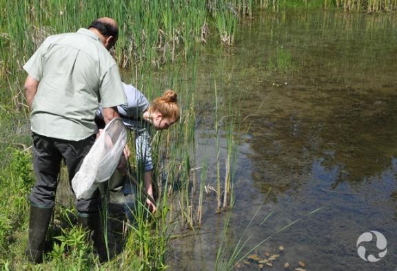Deux personnes plongeant des épuisettes dans un étang.