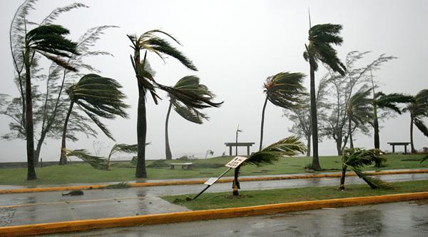 Des palmiers battus par des vents violents et de la pluie.