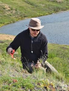 Un homme collectant des plantes dans la toundra.