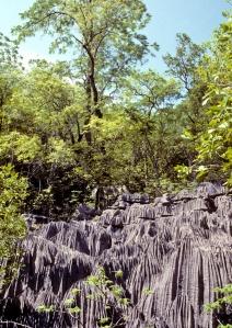 Une paroi rocheuse marquée de profonds sillons verticaux et entourée d'arbres.