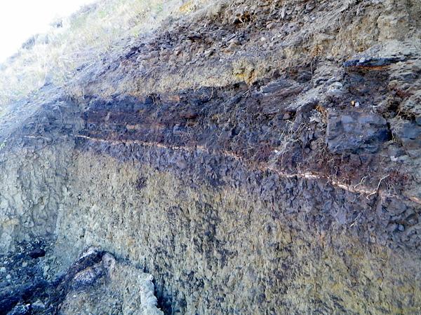 La paroi de roche sédimentaire in situ.