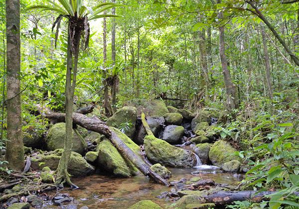 Un ruisseau coule entre des rochers couverts de mousse, sous le couvert d'arbres dans la forêt humide.
