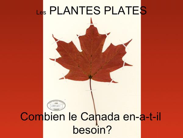 Un drapeau canadien arborant un spécimen de feuille d'érable séché.