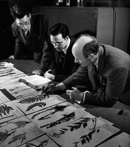 Trois hommes se penchent sur des spécimens de plantes séchées qui sont disposés sur une table.