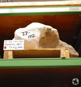 Une coque de plâtre sur une étagère.