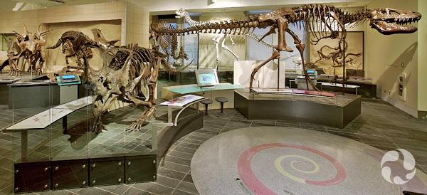 Ensemble de squelettes de dinosaures dans la Galerie des fossiles Talisman Energy.