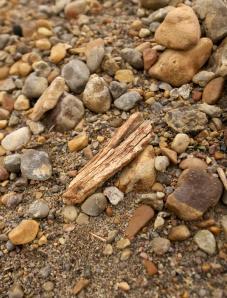 Un petit bout d'os sur le sol parmi les roches et les graviers.