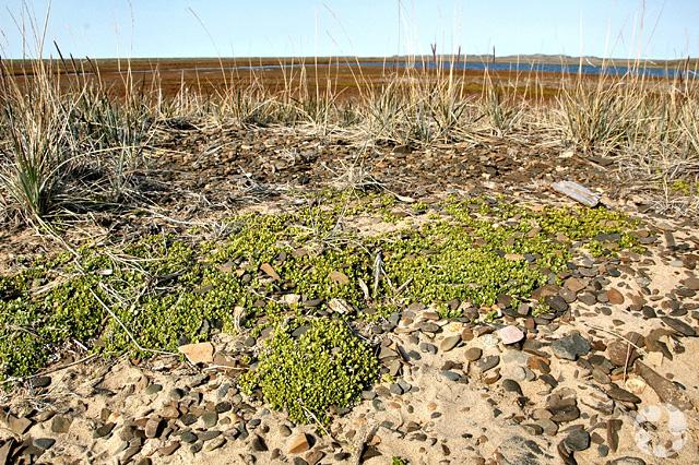 Un paysage rocheux avec deux types de végétation.