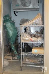 Par la porte ouverte, on aperçoit du matériel entassé dans une pièce réfrigérée.
