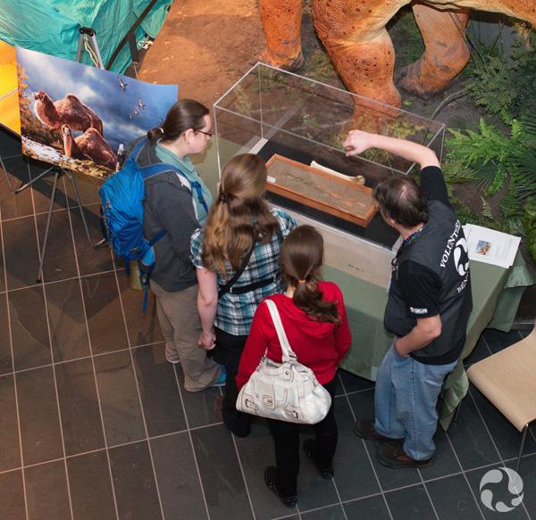 Quatre personnes, vues d'en haut, devant une vitrine d'exposition.