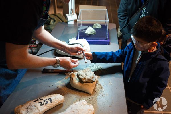 Aidé d'un adulte, un garçon dirige un stylo pneumatique vers un fossile.