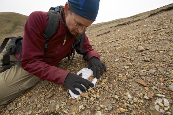 Natalia Rybczynski met du papier hygiénique sous un os fossile trouvé sur une pente sableuse.