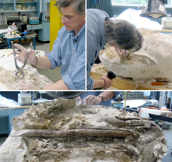 Montage de trois images qui montre un homme enlèvant le plâtre de la coque à l'aide de pinces, un homme utilisant une petite scie pour couper le plâtre, et une vue de la coque à moitié ouverte, avec des morceaux de bois.