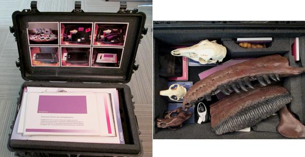 Collage de photos : une mallette ouverte laisse voir des panneaux, des livres et des feuilles explicatives (à gauche). Le second étage de la mallette (photo de droite) contient des crânes et des os fossilisés, réels ou reconstitués.