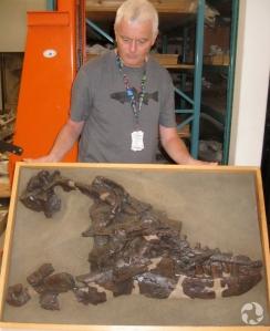 Replique du crâne d'Albertosaurus dans les collections du Musée.